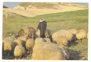 Bethlehem - Shepherd´s Field, 60-70s