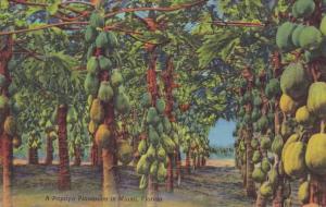 Papaya Plantation - Miami FL, Florida - Fruit Tree - Linen