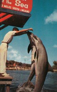 MIAMI , Florida , 1950-60s ; Dolphins , Theatre of the Sea