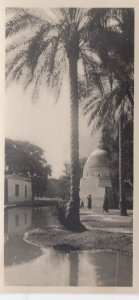 RP: EGYPT , 00-10s ; Cairo , Palm Trees in the Village of Marg