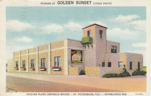 ST. PETERSBURG, FL, 30-40s; Golden Sunset Citrus Fruits Packing Plant