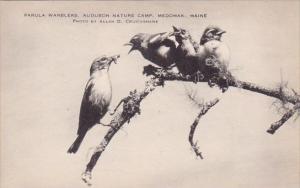 Parula Warblers Audubon Nature Camp Medomak Maine Artvue