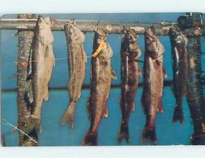 Pre-1980 Fishing FISH HANGING UP Postmarked Minong Wisconsin WI hn5376