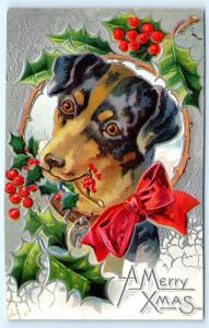 Postcard Christmas A Merry Xmas Dog Holly Red Bow c1912 A03