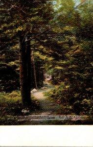 New Hampshire White Mountains Bethlehem Turner's Path To Mt Agassiz