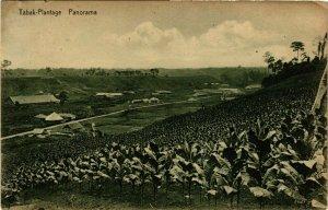 CPA AK INDONESIA Tabak-Plantage. Panorama (340830)
