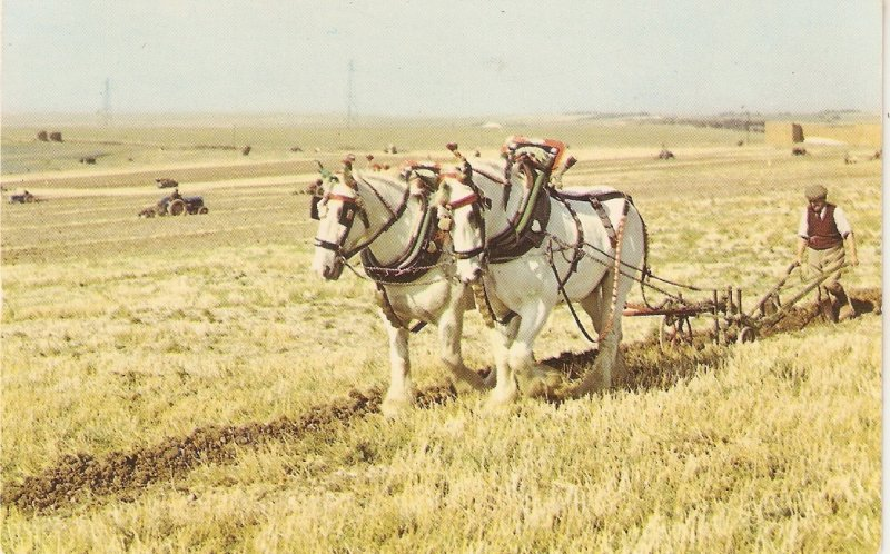 Ploughing in the Sussex Downs. Horses· Niceviontage English  postc