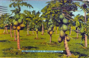 [ Linen ] US Florida St. Petersburg - Papaya Trees