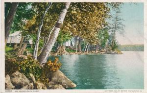 Birch Trees at Adirondack Camp, Adirondacks, New York - DB - Detroit Publishing