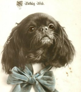 Antique Birthday card postcard RPPC dog Kings Charles Spaniel photograph #63
