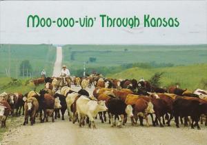 Kansas Flint Hills Cattle Drive