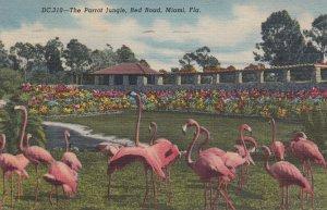 Florida Flamingos , 1930-40s #3 ; Miami