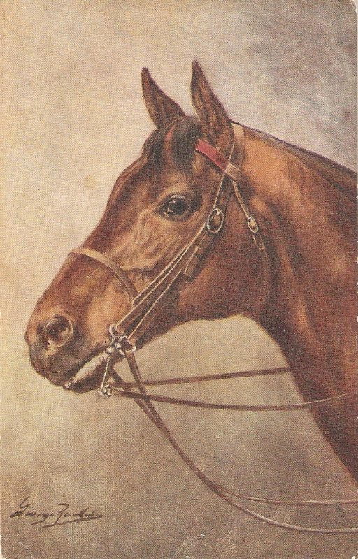 George Ranking. Head of a horse Old vintage Englosupostcartf