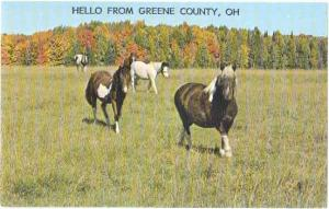 Horses in Pasture, Hello from Green County, Ohio, OH, Chrome