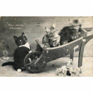Postcard of Kittens in Wheelbarrow 'Full Inside'