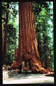 CA - Wawona - tunnel tree - Yosemite