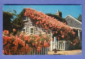 Cape Cod, Nass/MA Postcard, Rose Covered Cottage, 1962!