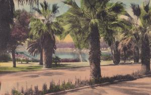 The Lake In The Park, Winter Park, Florida, 1900-1910s