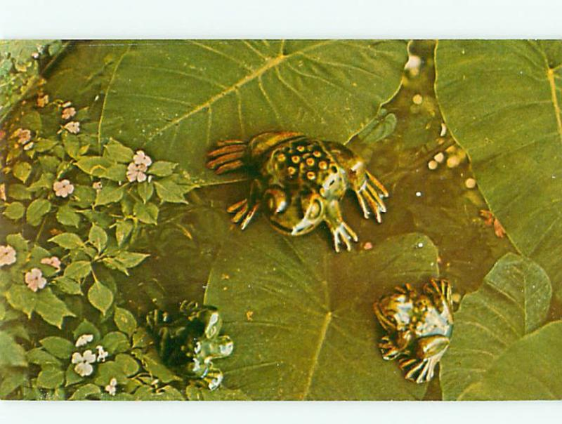 Vintage Post Card Coqui Frog Lilly Pad Lakes  Puerto Rico # 3753