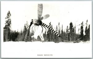 YUKON CANADA EXAGGERATED MOSQUITO w/ RABBIT VINTAGE REAL PHOTO POSTCARD RPPC