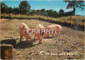 Modern Postcard Te by doing a Pig Pig head