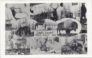 Lund's Exhibit Prince Albert Saskatchewan Lund Wild Life Exhibit Postcard G15