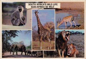 South Africa's Wild Life, Vervet Monkey & Baby, Graceful Impala, Giraffe, Ele...