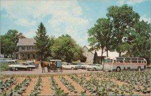 The Amish Farm & House Pennsylvania Vintage Postcard
