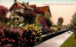 California Garden Vista Beautiful Hedge Of Roses