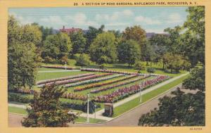 Maplewood Park Section of Rose Gardens - Rochester, New York - pm 1947 - Linen