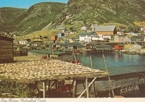 PETTY HARBOUR, Newfoundland, Canada, 1950-60s; Cod left to dry