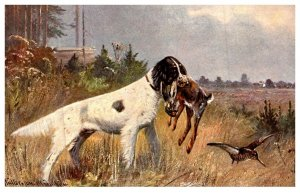 Dog ,  Retriving Killed rabbitt