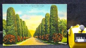 STD Vintage Stately Austrailian Pines Florida Posted 1941 Linen