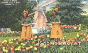 Tulips, Gardens of JB Ivey Charlotte NC Unused