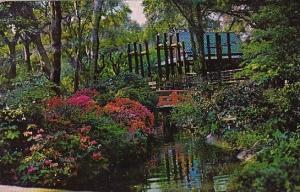 California La Canada Descanso Gardens 1986
