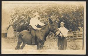 Man Sitting on Donkey in Barnyard RPPC Unused c1910s