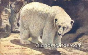 Lincoln Park, Chicago, USA Bear Postcard,  Bear Post Card Old Vintage Antique...
