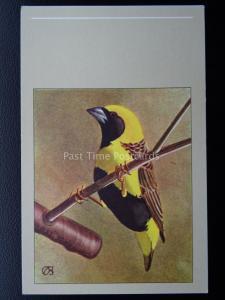 Birds NAPOLEON WEAVER Vintage Postcard by P. Sluis - Series 3/27