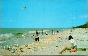 Postcard Gulf of Mexico Bonita Beach Bonita Springs Florida Ocean Seagulls 1683