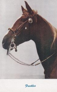Horse Portrait , 40-60s ; Freckles