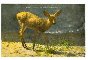Fawn, Bambi Pet of Big Valley, California, 30-40s