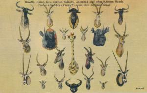 Hunting - African Heads at Buckhorn Curio Museum - San Antonio TX, Texas - Linen