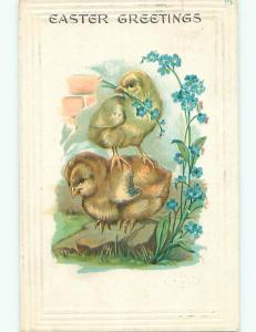 Pre-1907 easter CHICK STANDS ON BACK OF OTHER CHICK k1955