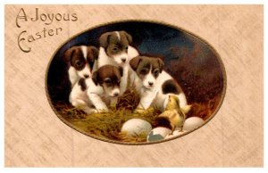 Dog ,  Puppies and Chicks , a Joyous Easter