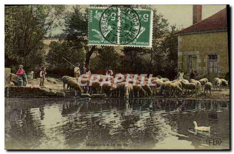 VINTAGE POSTCARD Fantasy Sheep with the pond Breeding