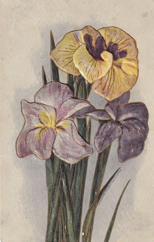 STILL LIFE, 1900-10s; Viola Flowers