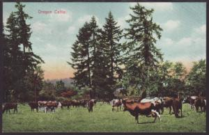 Oregon Cattle Postcard