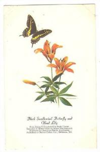 AS: Black Swallowtail Butterfly and Wood Lily, Peterson, 10-20s