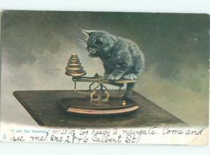Pre-Linen CUTE KITTEN CAT SITTING ON ANTIQUE BALANCE SCALE AC5495