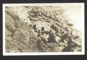 RPPC SEA LION CAVES SEA LIONS VINTAGE REAL PHOTO POSTCARD